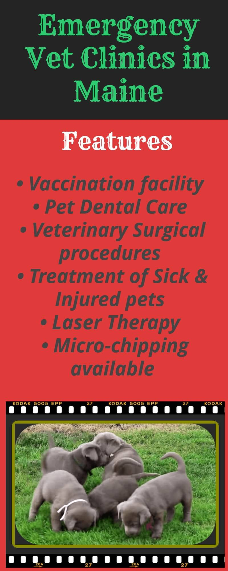 Emergency Vet Clinics in Maine, USA