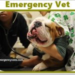 Emergency Vet - Top 10 Emergency Veterinarians, Cost and Clinics