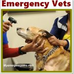 Emergency Vet, Emergency Doctors,