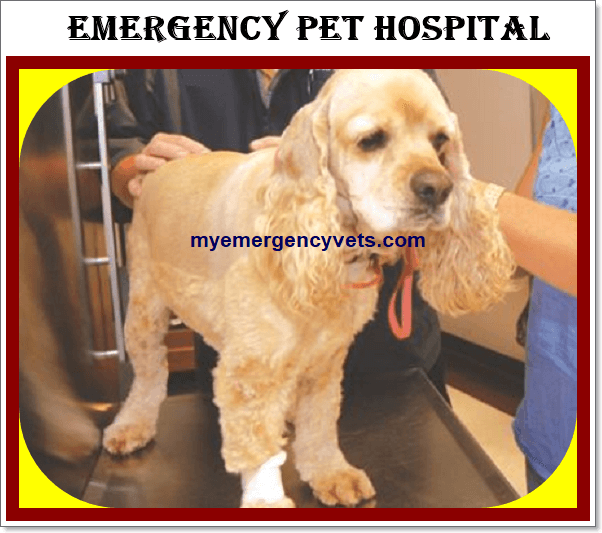 Emergency Pet Hospital near me