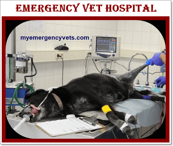 Emergency Vet Hospital near me