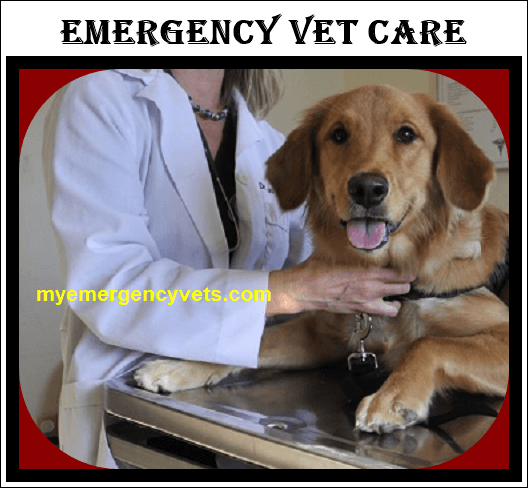 Emergency Vet Care Services
