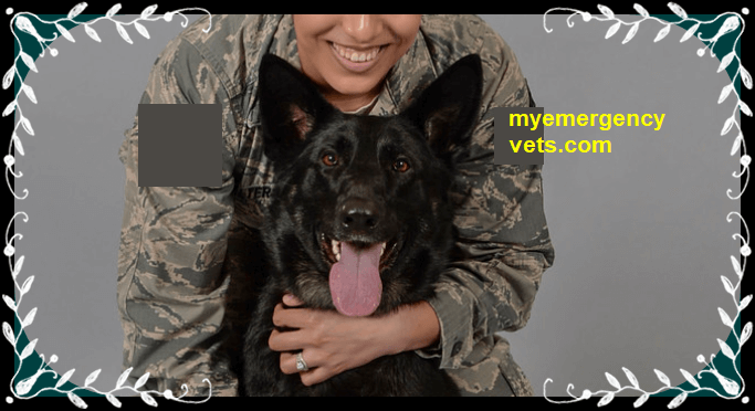 Emergency Vet Care Service