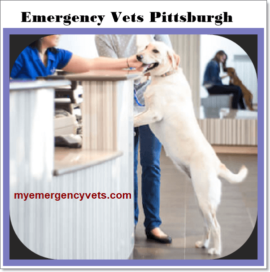 Emergency Vets Pittsburgh